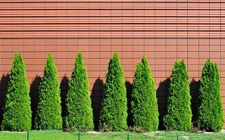 Arborvitae nutrients
