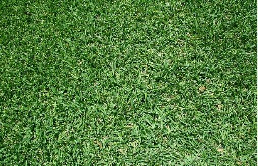 Fertilizer for st augustine