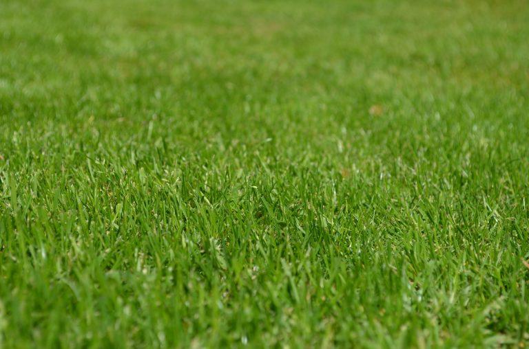 Best Fertilizers for Southern Lawn