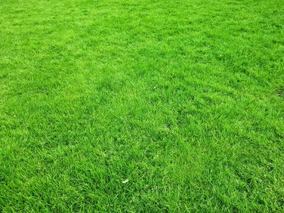 Best fertilizers for St. Augustine Grass