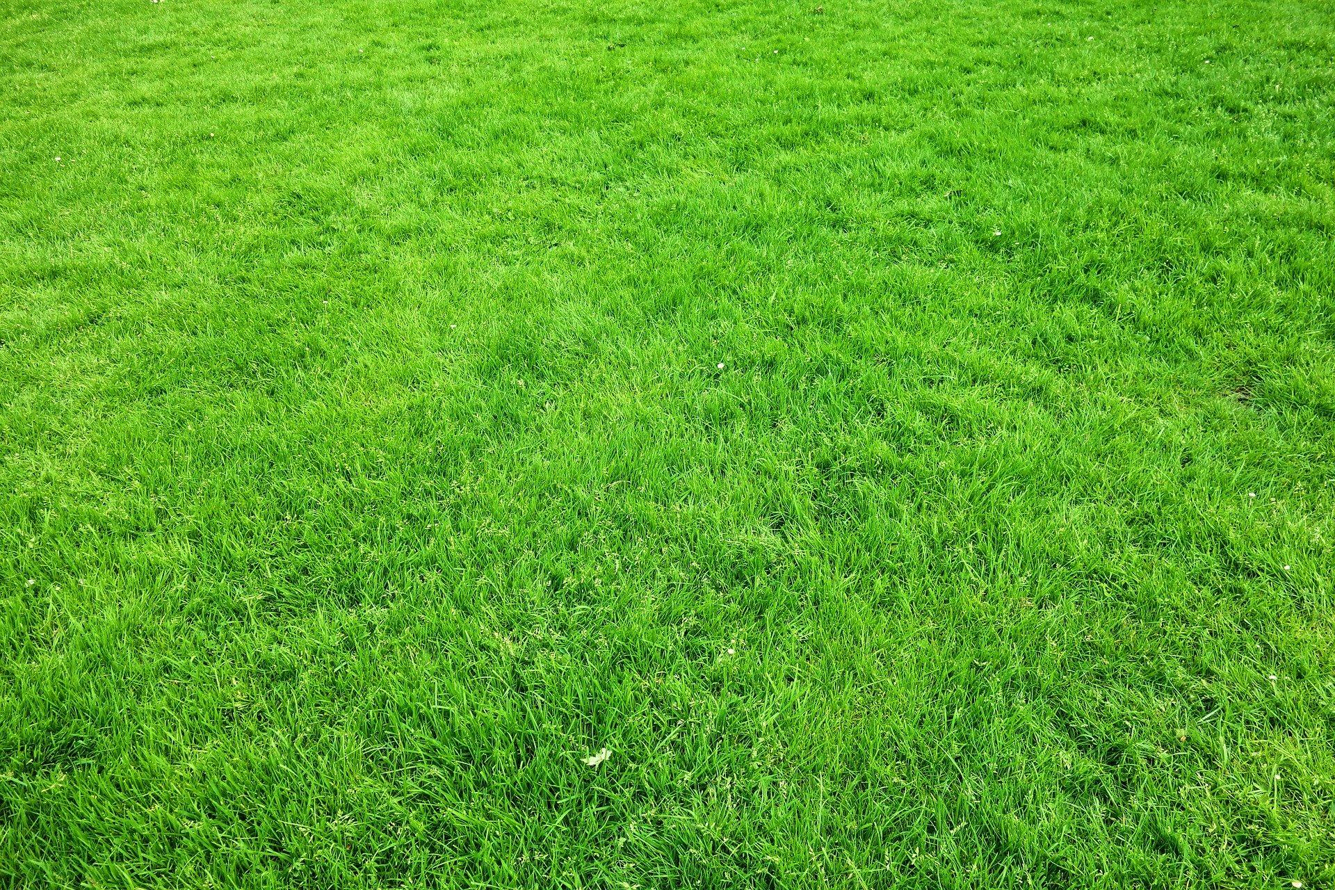 Best Fertilizers for St. Augustine Grass