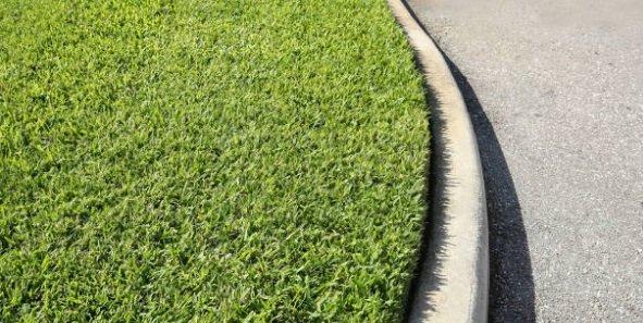 St augustine grass2