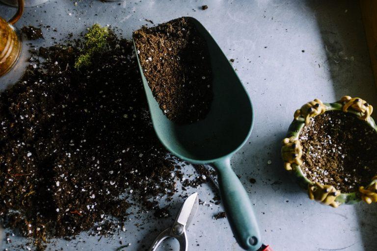 Best Soil for Fiddle Leaf Fig