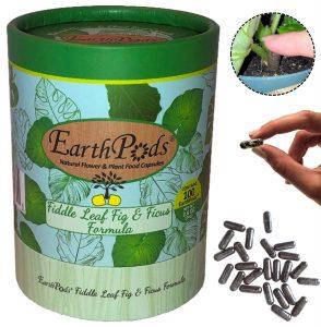 EarthPods Best Fiddle Leaf Fig Fertilizer