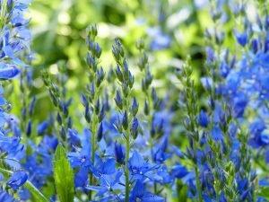 Fertilizer NPK Featured