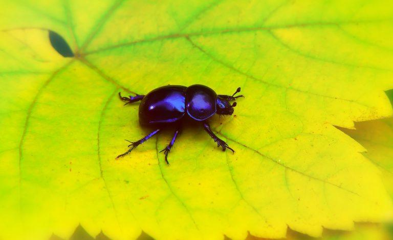 lawn beetle on leaf