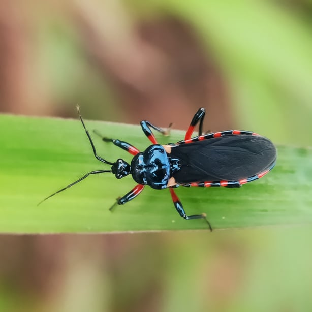 They hunt many of the typical pests that can be damaging.