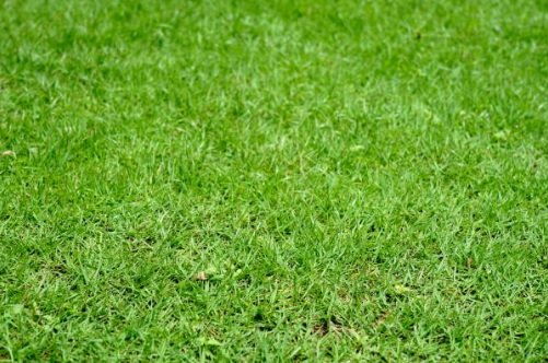 A luscious lawn requires proper nutrients to be absorbed by the roots