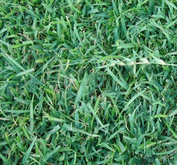 Nutrients for grass