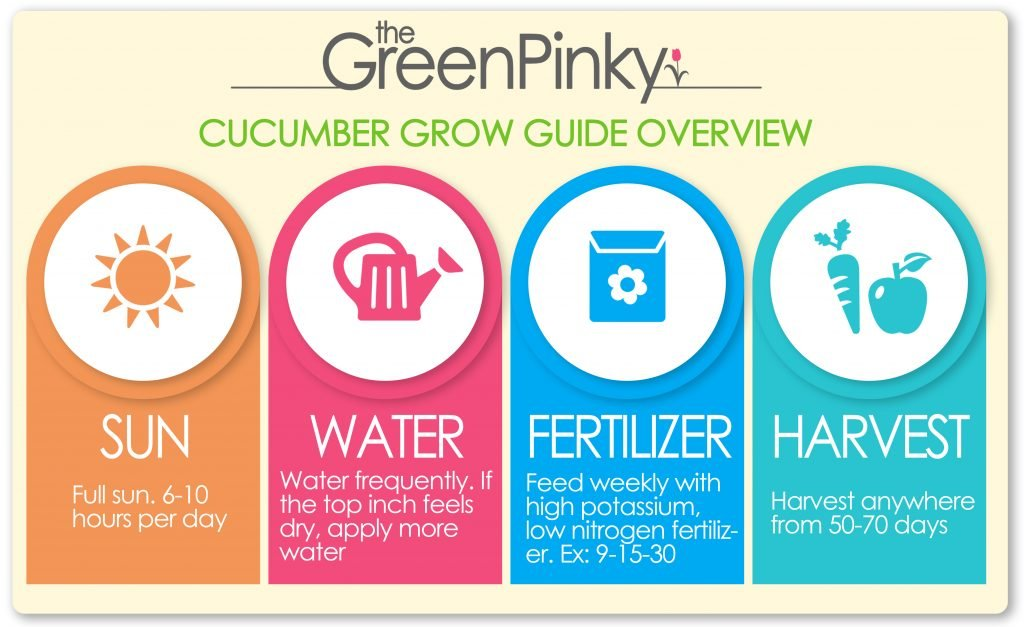 Grow guide overview. The image shows the amount of sun, water, fertilizer, and when to harvest cucumber.