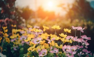 Gardening – The Secret to Happiness