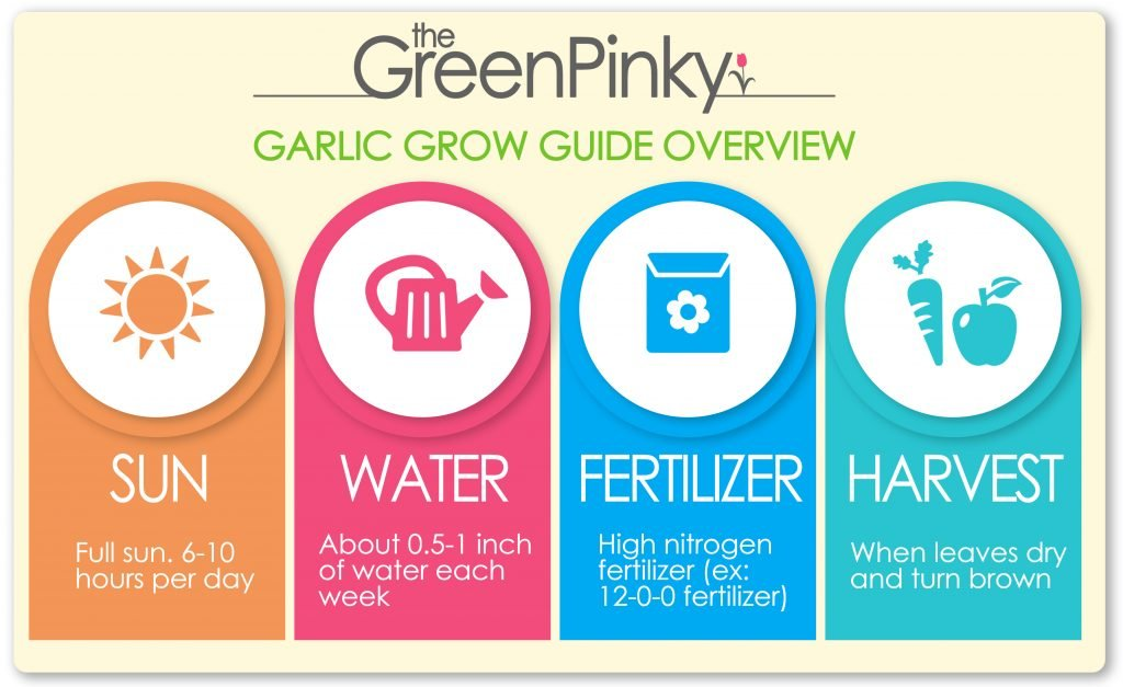 Image showing a quick grow guide overview including the amount of sun, water, fertilizer, and harvest time
