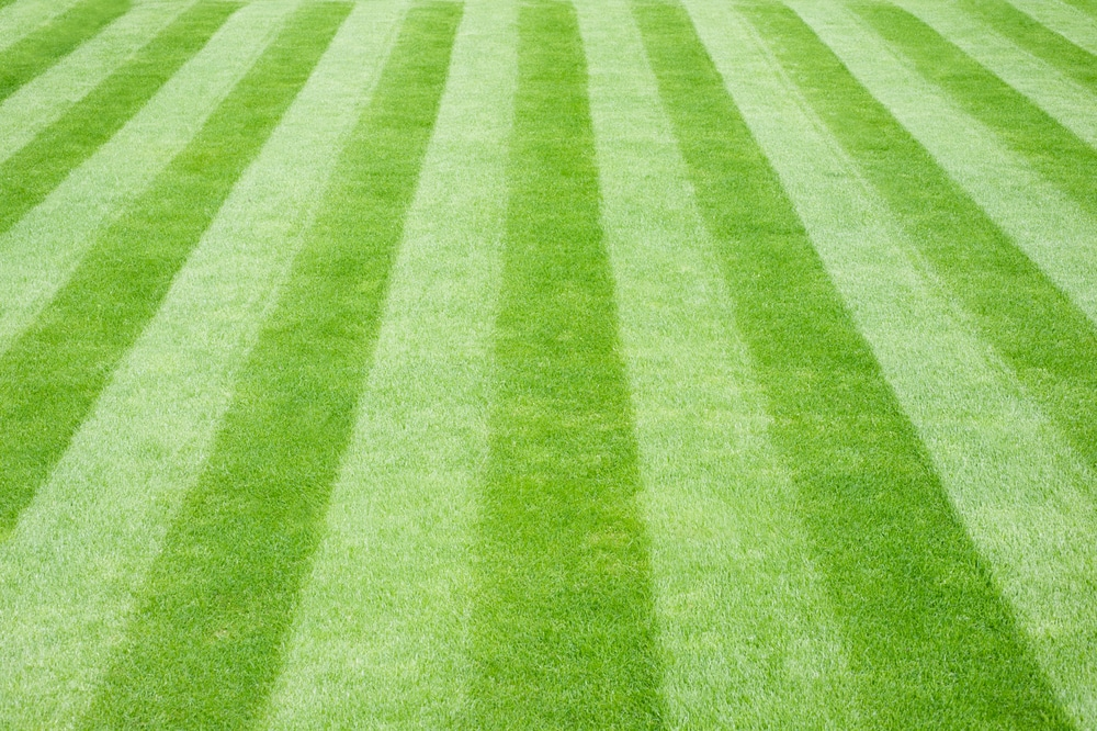 Freshly mowed lawn with striped pattern