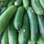 How to Grow and Care for Cucumbers