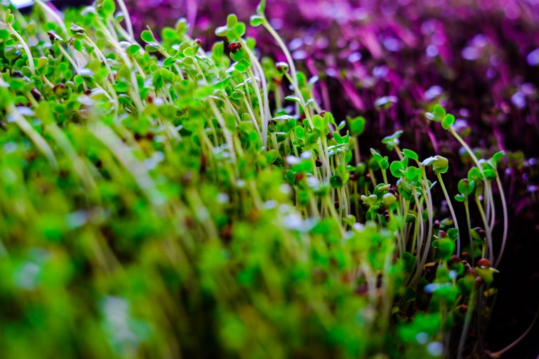 Microgreen course homegrown