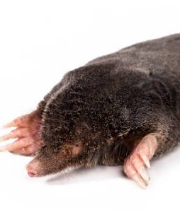 Best Ultrasonic Mole Repeller