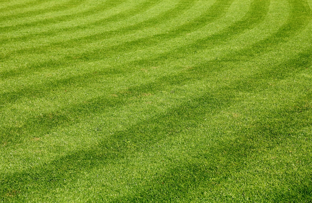 Stripes can be seen in variation of dark green and light green in the grass