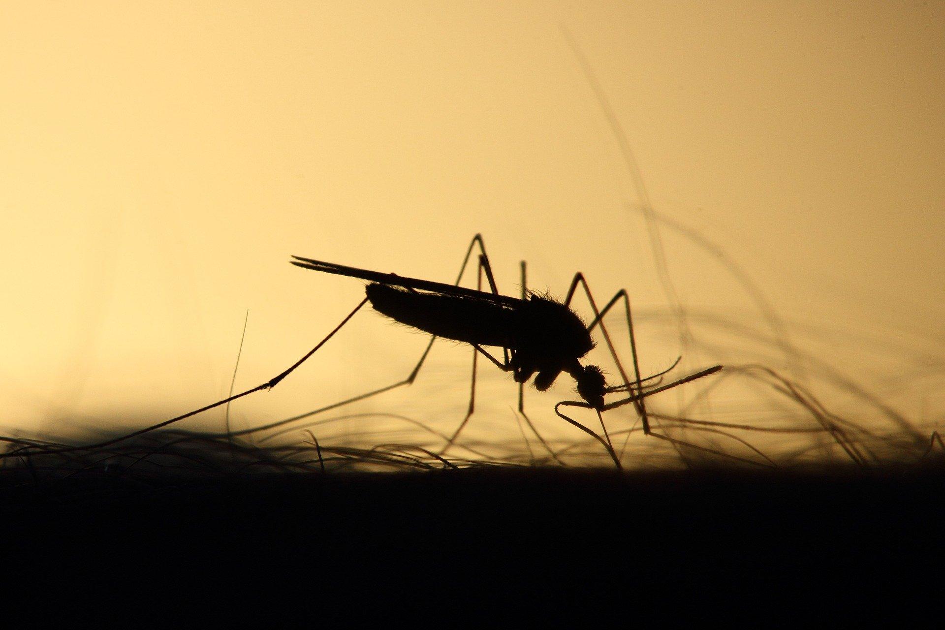 Best Ultrasonic Mosquito Repeller