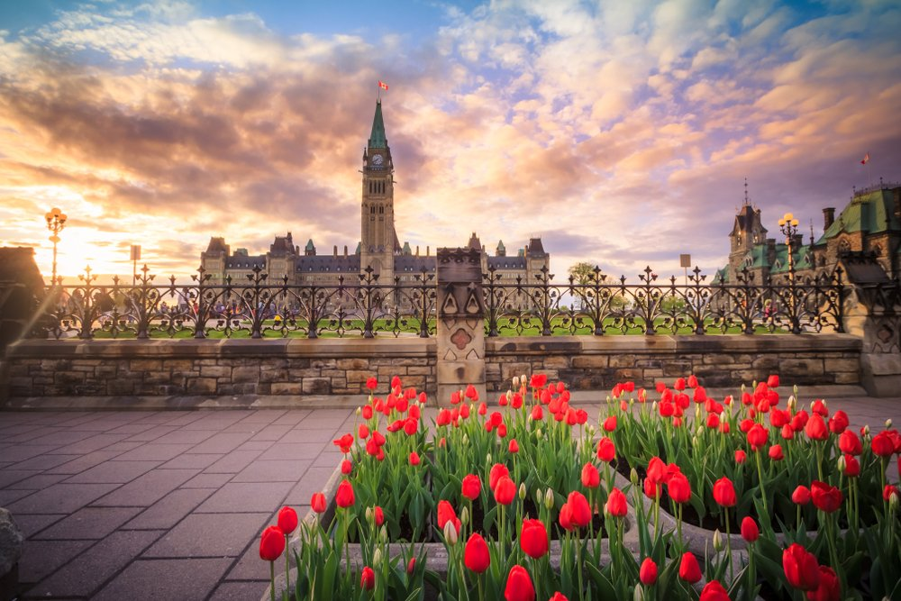 A bed of red roses with the backdrop of a big building in ontario canada