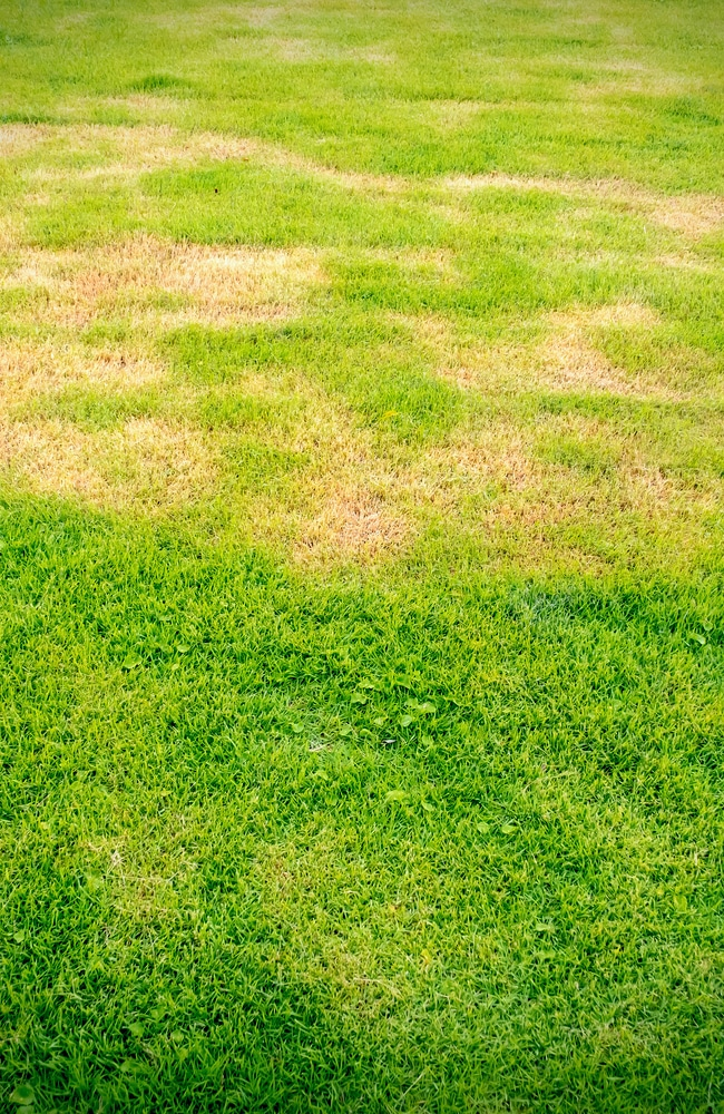 Poor soil drainage can lead to moss growth that requires maintenance