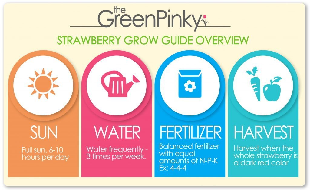 A overview care guide of the amount of sun, water, fertilizer, and when to harvest