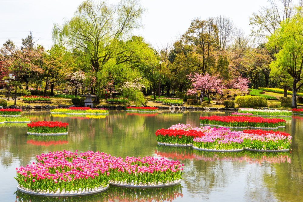 A couple floating tulip beds in a beautiful scenery in Japan
