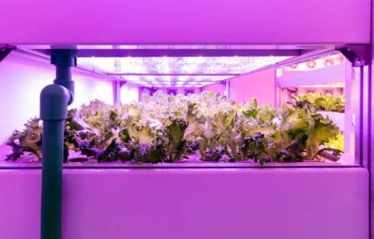 UV grow lights for hydroponics