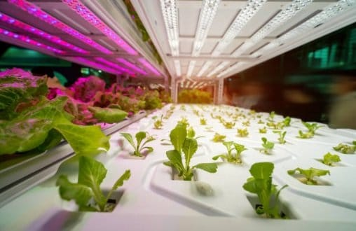 UVA Grow lights can provide extra spectrum to plants