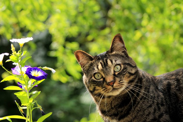 Keep cats away from the garden