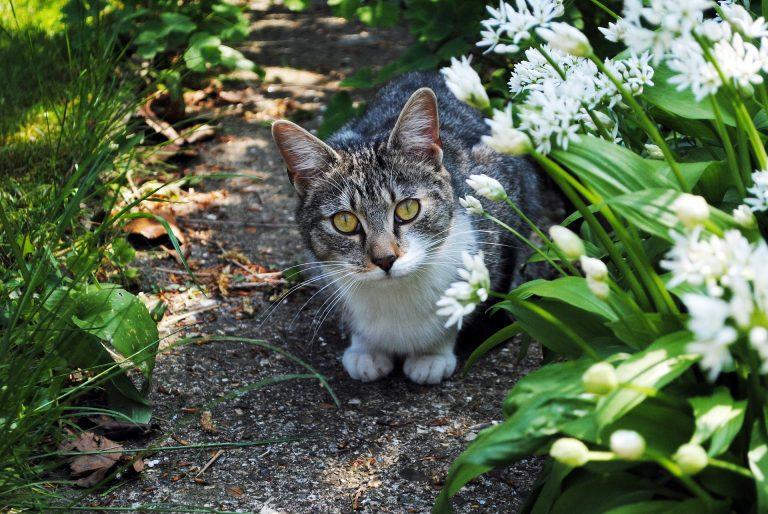 Best ultrasonic cat repellers