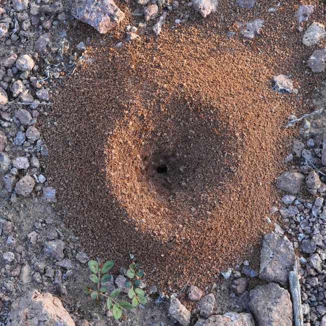 Ant hill on a property that needs to be gotten rid of