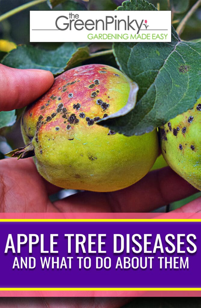 Many diseases can infect these fruit trees. A guide is needed to diagnose and treat the issues.