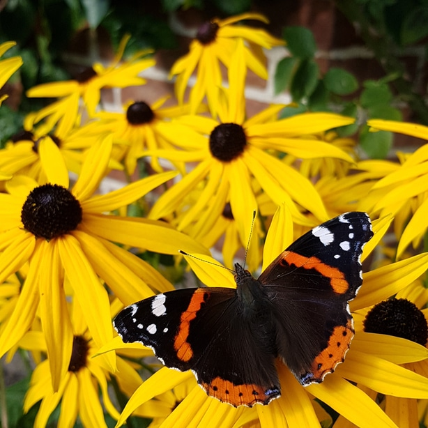 They will definitely attract pollinators like butterflies