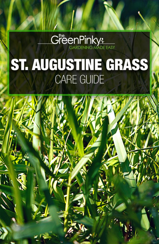 St. Augustine grass grows best with a care guide