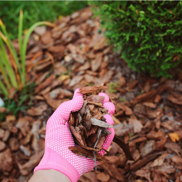 Traditional bark mulch is being used in this garden.