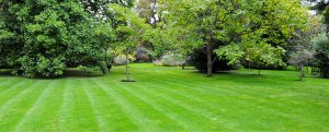 Knowing the type of grass will lead to a healthier lawn