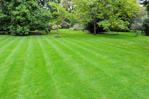 Yards can be made beautiful and healthy with appropriate application of lime.