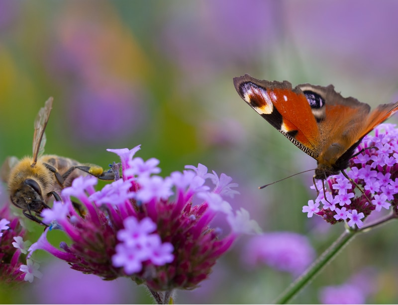 Bees and other pollinators will be attracted to the flowers and plants as well.