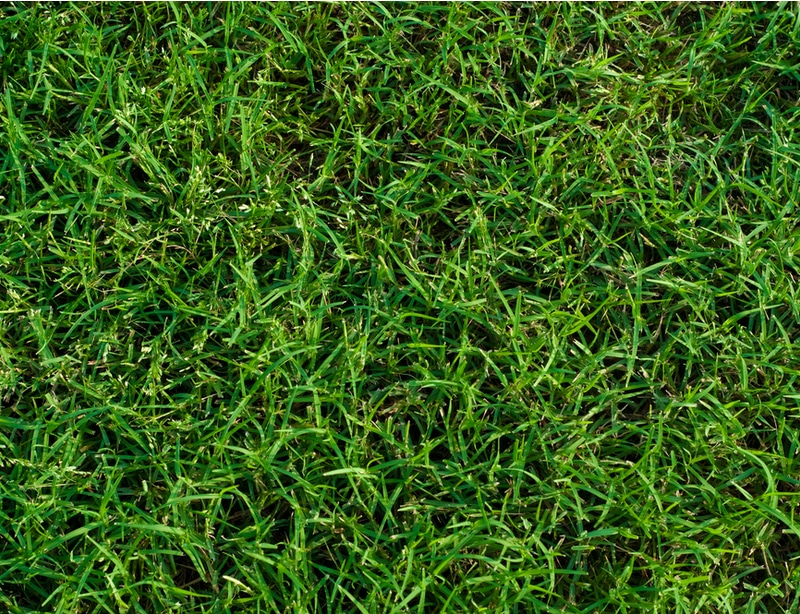 Healthy green grass due to proper nutrients.