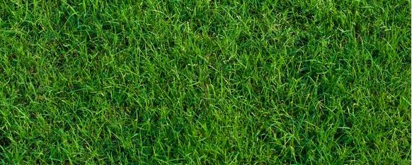 Bermuda Grass Guide