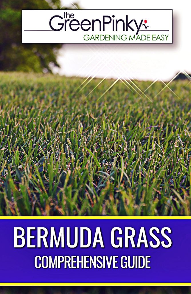 Bermuda grass grows optimally when given proper care with a guide