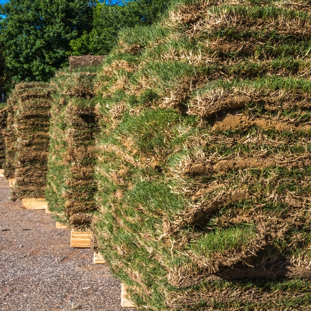 Bermuda sod sitting in pallets ready to be installed