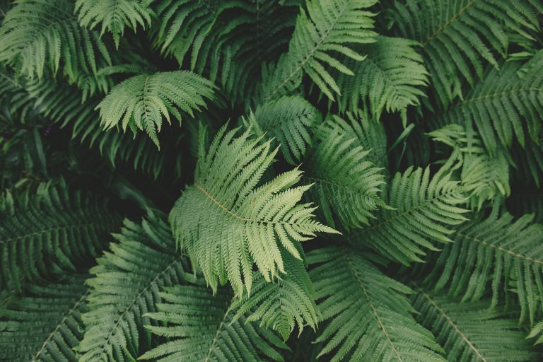 Best fertilizer for fern will allow it to grow optimally