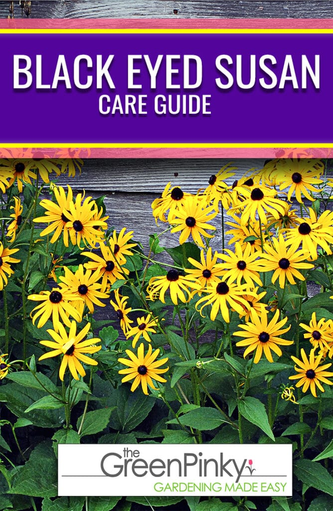 Come learn how to raise these flowers with our comprehensive guide.