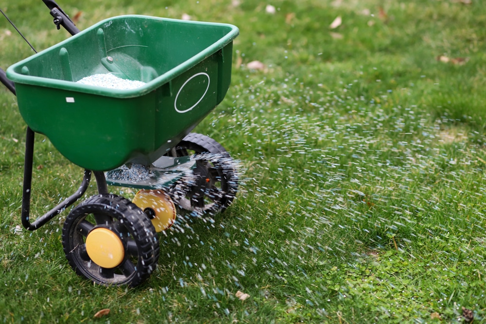 A push-style broadcast spreader is show spewing fertilizer on the lawn