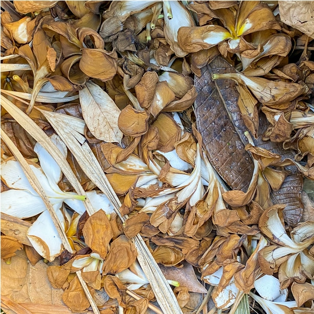 Brown organic materials in a compost pile