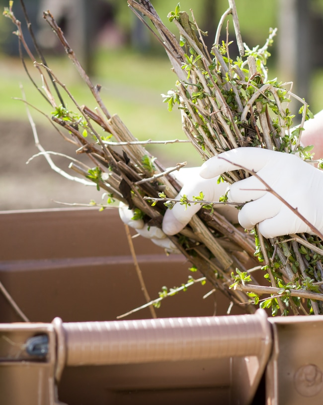 Twigs are brown organic materials necessary for a compost pile.
