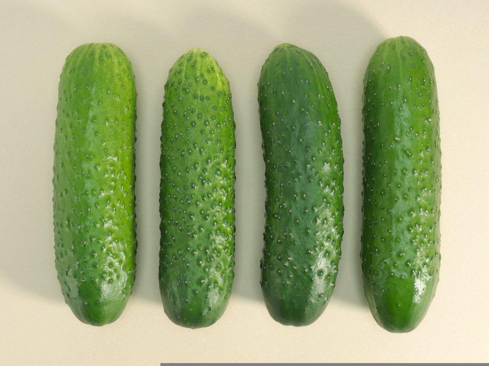 Bush champion cultivar cucumber with warts