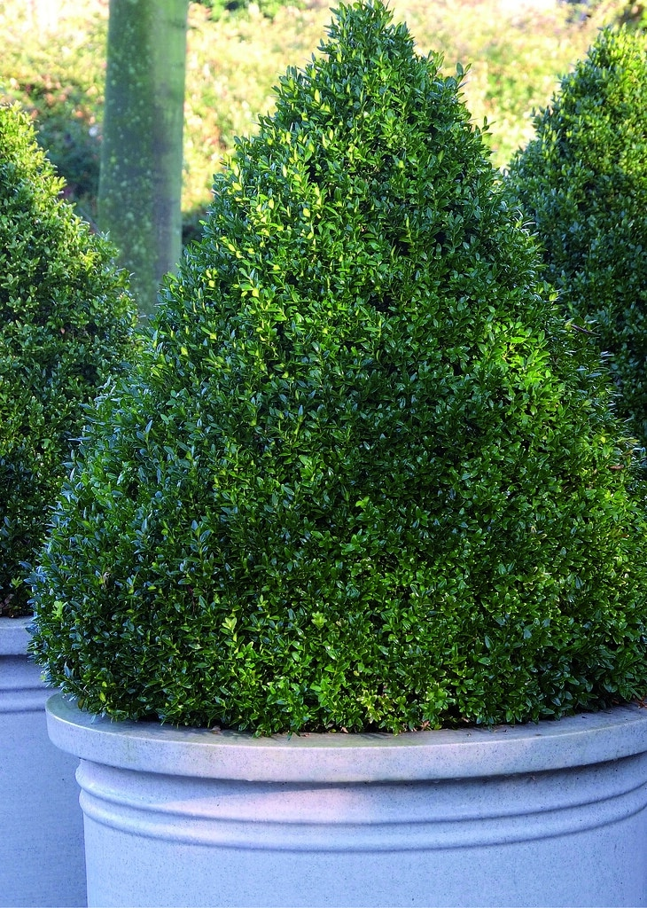 bushes are organized after they are pruned well