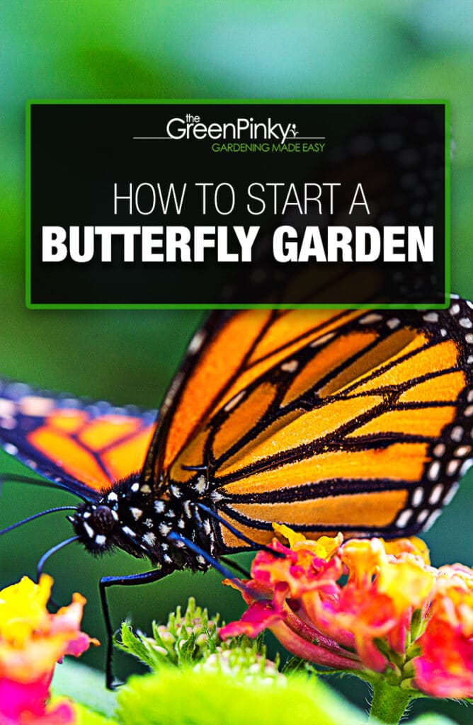 Setting up a garden filled with nectar plants will help attract butterflies.